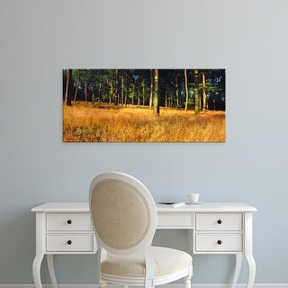 Easy Art Prints Panoramic Images's 'Trees in a forest, Schwarzwalder Hochwald, Germany' Premium Canvas Art