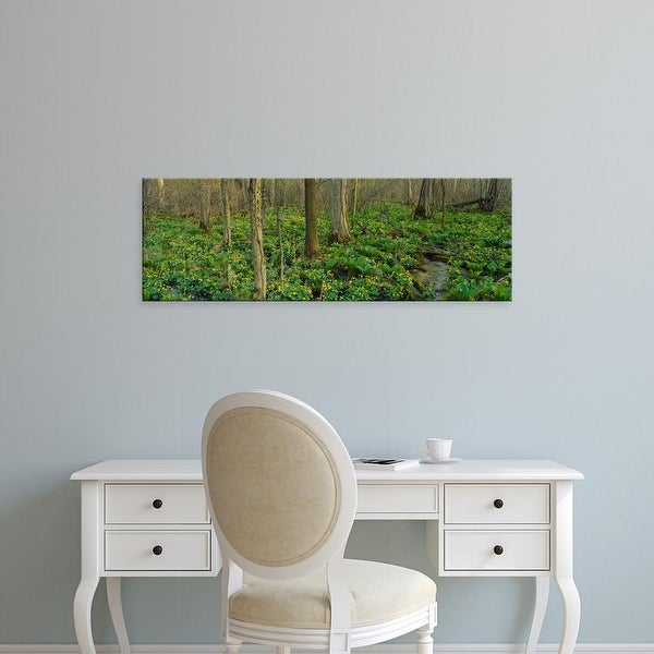 Easy Art Prints Panoramic Images's 'Trees among yellow flowers in the forest, Cedar Bog, Urbana, Ohio, USA' Canvas Art