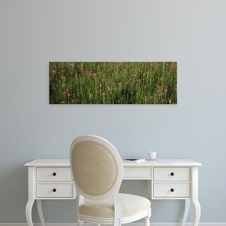 Easy Art Prints Panoramic Images's 'Wildflowers blooming in a field, Lee County, Illinois, USA' Premium Canvas Art