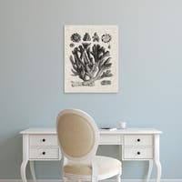 Easy Art Prints Vision Studio's 'Coral Specimen IV' Premium Canvas Art