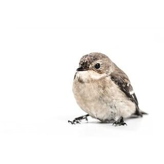 Bird Portrait Photograph Wall Art Canvas