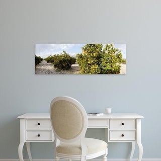 Easy Art Prints Panoramic Images's 'Orange trees in a field, Vinaros, Province of Castellon, Spain' Premium Canvas Art