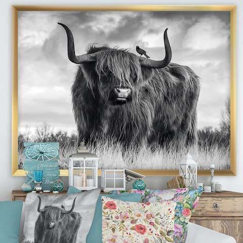 Designart 'Longhaired Scottish Bull' Cottage Framed Art Print