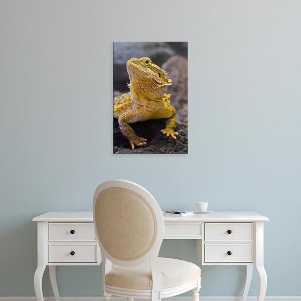 Easy Art Prints Adam Jones's 'Bearded Dragon' Premium Canvas Art