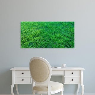 Easy Art Prints Panoramic Images's 'Grass Sacramento CA USA' Premium Canvas Art