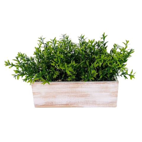 """Water Grass in Wood Box 10"""" - 16"""