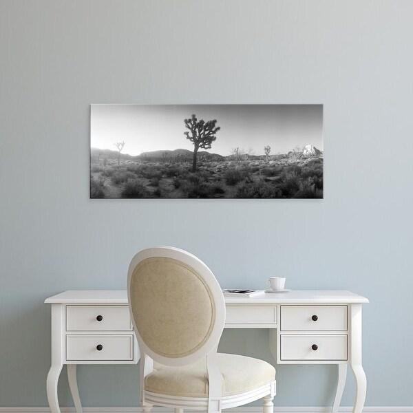 Easy Art Prints Panoramic Image 'Desert, Joshua Tree National Park, San Bernardino, California' Canvas Art