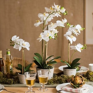 RusticReach White Orchid Potted Plant in Various Size