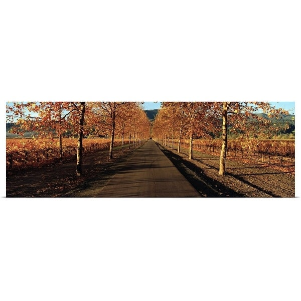 """Vineyards along a road, Beaulieu Vineyard, Napa Valley, California"" Poster Print"