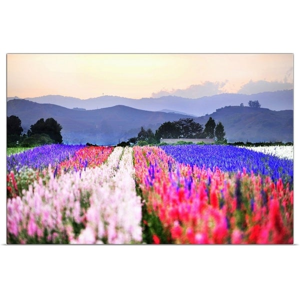 """""""Close up of flowers tulips in rows in fields with mountains."""" Poster Print"""