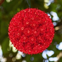 "Wintergreen Lighting 70187 6"" Starlight Sphere with 50 Red Lights"