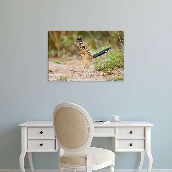 Easy Art Prints Larry Ditto's 'Greater Roadrunner' Premium Canvas Art