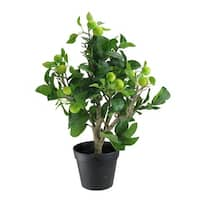 """23"""" Artificial Potted Bonsai-Style Decorative Green Apple Tree"""