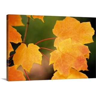 Premium Thick-Wrap Canvas entitled Autumn Color Maple Tree Leaves