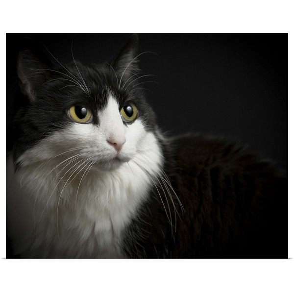 """""""Black and white cat, low-key on black background. Yellow eyes, and long whiskers."""" Poster Print"""