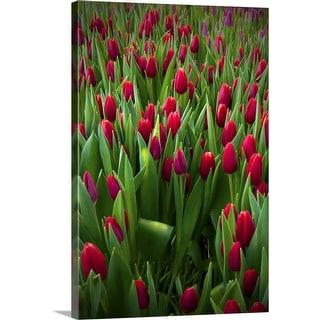 """Red tulip field."" Canvas Wall Art"