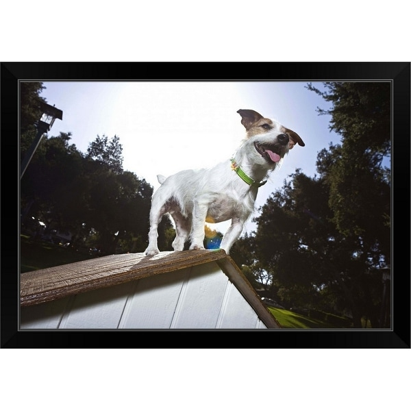 """""""Jack Russell Terrier on top of doghouse"""" Black Framed Print"""