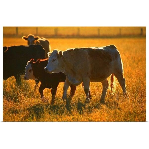 """Cows at pasture"" Poster Print"