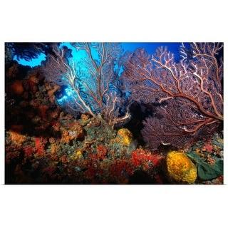 """""""Sea fan garden in St Thomas"""" Poster Print"""