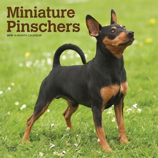 Shop Miniature Pinschers Wall Calendar Miniature Pinscher By