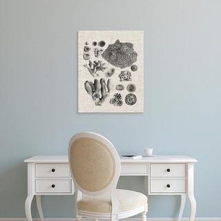 Easy Art Prints Vision Studio's 'Coral Specimen II' Premium Canvas Art
