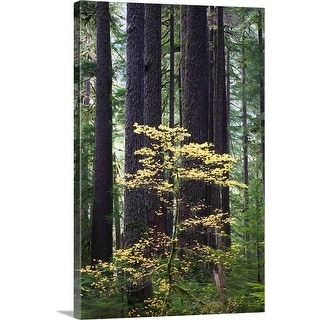 """""""Old-growth rain forest, Sol Duc Valley, Olympic National Park, Washington"""" Canvas Wall Art"""