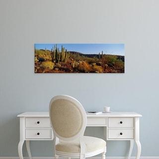 Easy Art Prints Panoramic Image 'Ocotillo Cactus in a desert, Organ Pipe Cactus National Monument, Arizona' Canvas Art