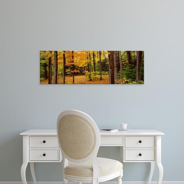 Easy Art Prints Panoramic Image 'Trees in a forest, Chestnut Ridge County Park, Erie County, New York State' Canvas Art