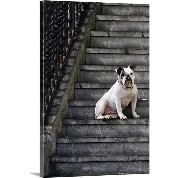 """A bulldog sits on steps in Mundaka, Spain"" Canvas Wall Art"
