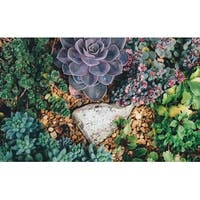 Succulent Plants Photograph Wall Art Canvas