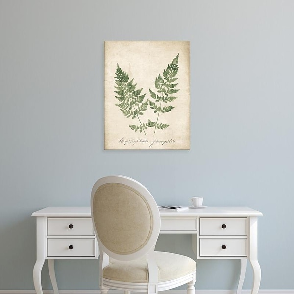 Easy Art Prints Wild Apple's 'Vintage Ferns VII no Border' Premium Canvas Art