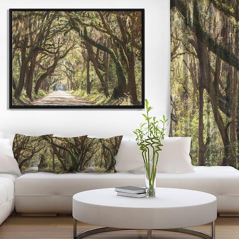 Designart 'Trees Tunnel in Botany Bay' Landscape Wall Art on Framed Canvas