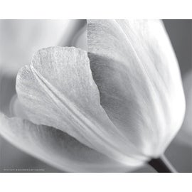 ''Tulip I'' by Dennis Frates Floral Art Print (8 x 10 in.)