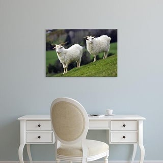 Easy Art Prints David Wall's 'Scottish Cow' Premium Canvas Art