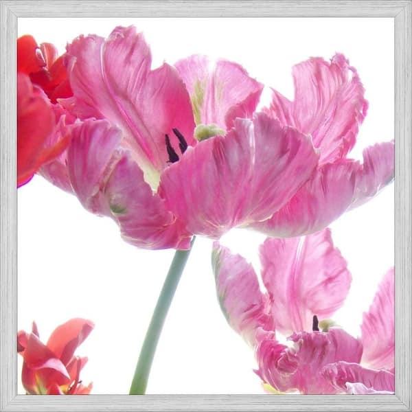 Easy Art Prints Judy Stalus S Parrot Tulips Premium Canvas Art Overstock 25740893