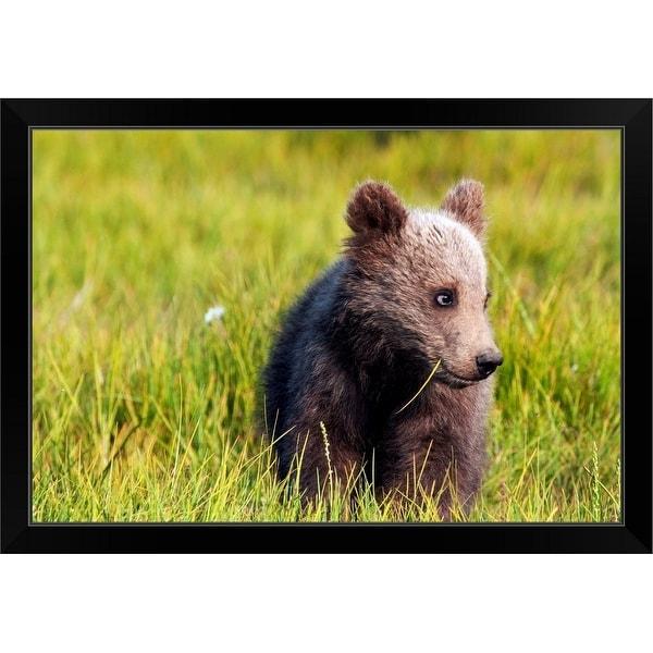 """Brown bear cub, Alaska"" Black Framed Print"