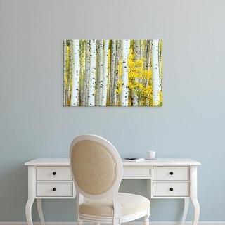 Easy Art Prints Rob Tilley's 'Aspen Grove' Premium Canvas Art