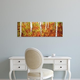 Easy Art Prints Panoramic Image 'Aspen trees in forest, Shadow Mountain, Grand Teton National Park, Wyoming' Canvas Art