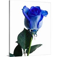 Premium Thick-Wrap Canvas entitled Close-up of blue rose
