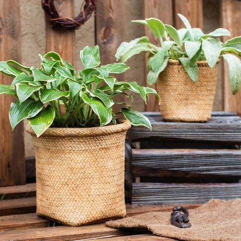 RusticReach Basket Style Concrete Planter