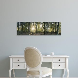 Easy Art Prints Panoramic Images's 'Trees in a forest, Black Forest, Freiburg im Breisgau, Baden
