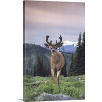 Premium Thick-Wrap Canvas entitled Deer,  Olympic National Park  Washington  USA