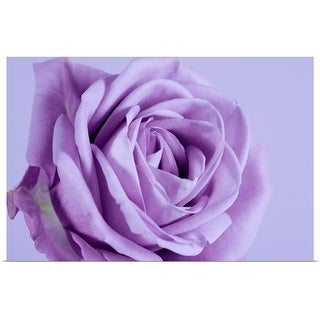 """Purple rose"" Poster Print"