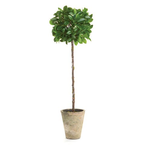 """Ficus Topiary Potted 27"""""""
