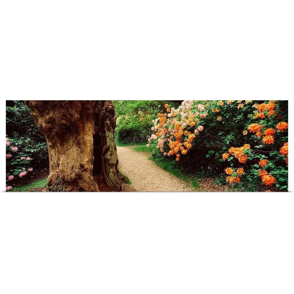 Shop Isabella Plantation In A Park Richmond Park London England Poster Print Overstock 16889185