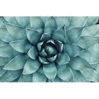 Succulent Plant Photograph Wall Art Canvas