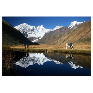 """""""Andean Cows"""" Poster Print"""