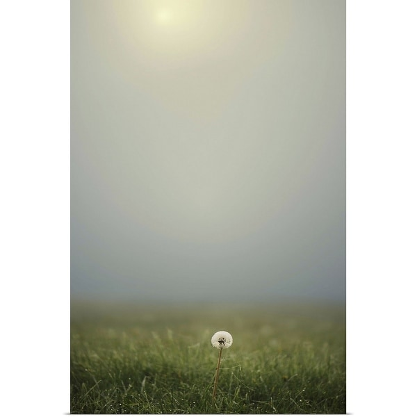 """Dandelion on meadow, both covered with morning dew water drops and foggy background."" Poster Print"