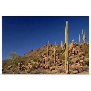"""""""Saguaro cacti and Tucson Mountains, Tucson, Arizona"""" Poster Print"""
