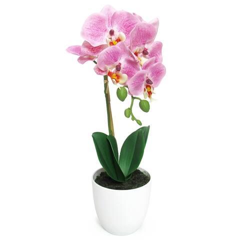 Phalaenopsis Orchid Flower Arrangement in White Pot 17in